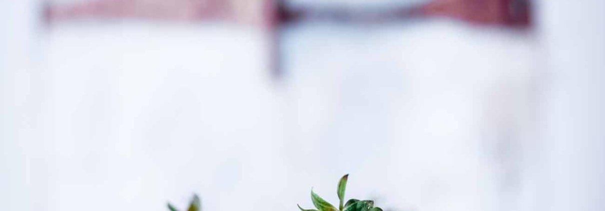 """Jetzt, wo die ersten Erdbeeren aus Deutschland erhältlich sind, können wir so richtig mit den Erdbeer-Rezepten loslegen, oder? Mein """"Raffaello"""" Dessert erinnert an die weißen Kokoskugeln und ist mindestens genauso schnell gegessen. Habe ich schon gesagt, dass ich solch einfache Desserts einfach liebe? Bestimmt."""